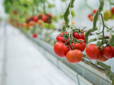 Are Hydroponic Vegetables Just as Nutritious as Those Grown in Soil?